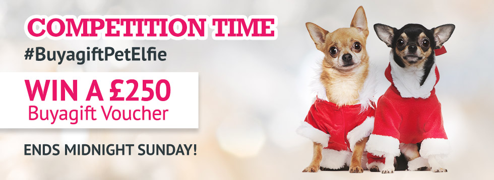 Competition time - #BuyagiftPetElfie Win a £250 Buyagift voucher - Ends Midnight Sunday!
